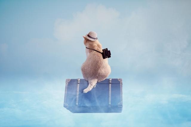 旅行がもたらす婚活が上手に進む方法とは。楽しく賢く旅行しましょう